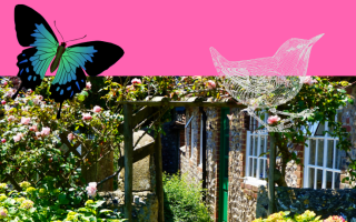 A garden with a cartoon butterfly and bird to illustrate wildlife