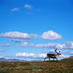 Five reasons to visit Norway