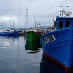 Fish tour and cooking in Palamós