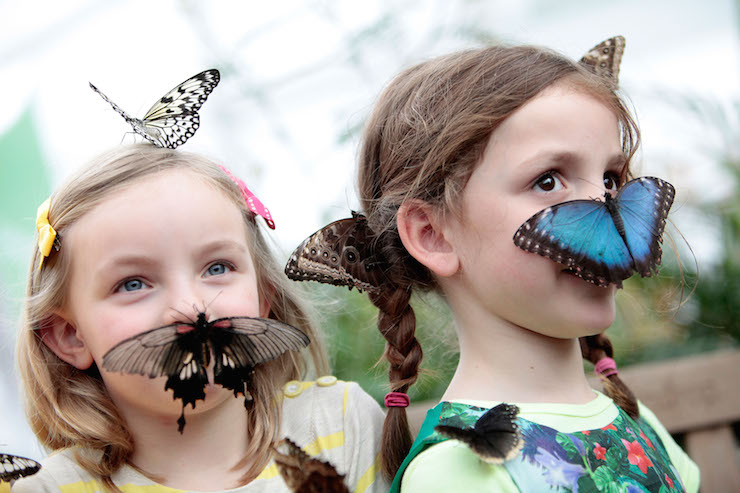 Sensational Butterflies exhibition © The Trustees of the Natural History Museum, London.