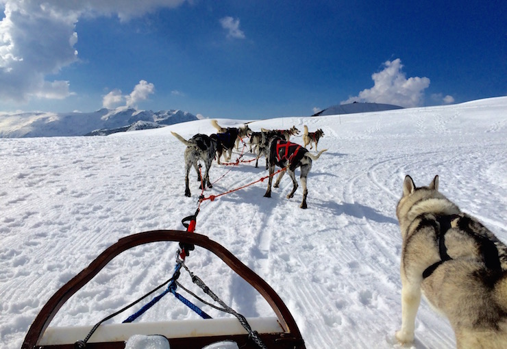 Dog-sledding in Alpe d'Huez. Copyright Gretta Schifano