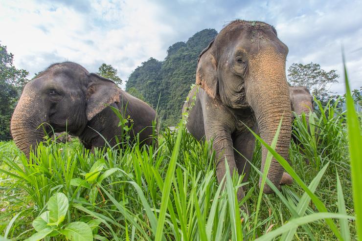 Elephants, Thailand. Image courtesy of The Turquoise Holiday Company