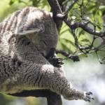 8 reasons to visit Australia