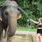 Washing Tim the elephant, Elephant Hills, Thailand. Copyright Gretta Schifano