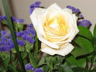 white-rose.jpg