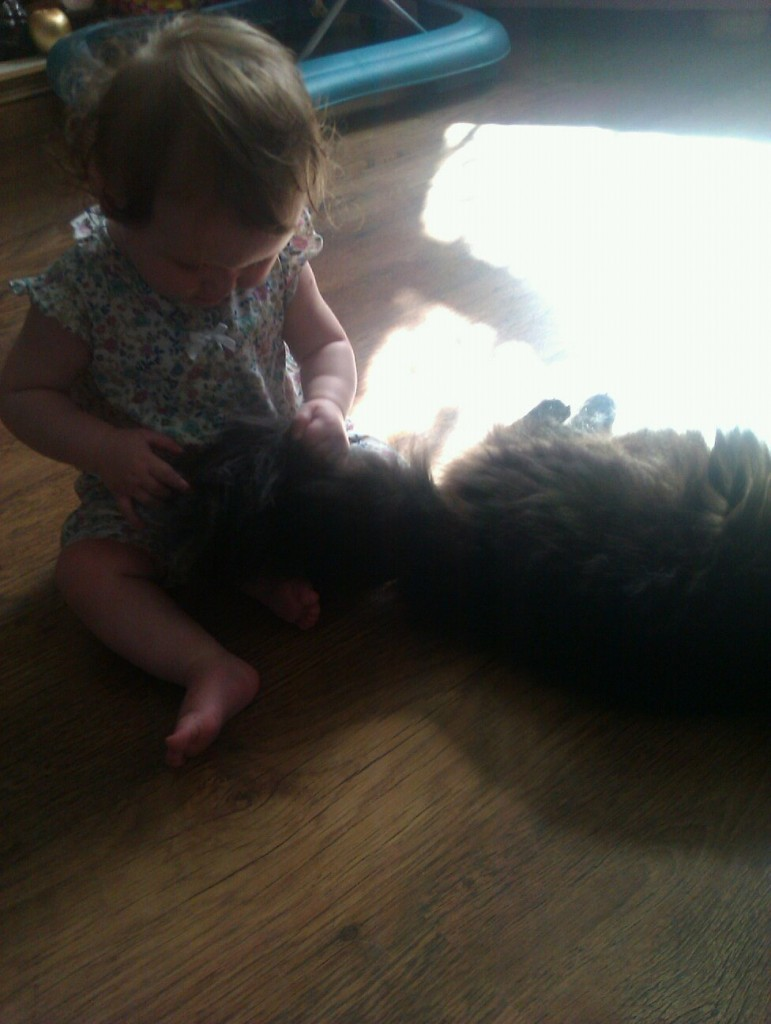 Babies and Pets? 2