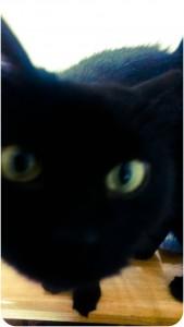 Cat, Black Cat