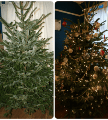 tree1_thumb.png