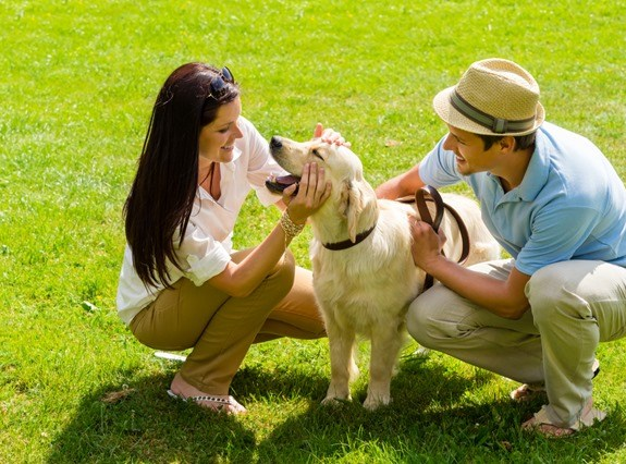 Keeping your Pets Happy and Healthy in Hot Weather 4