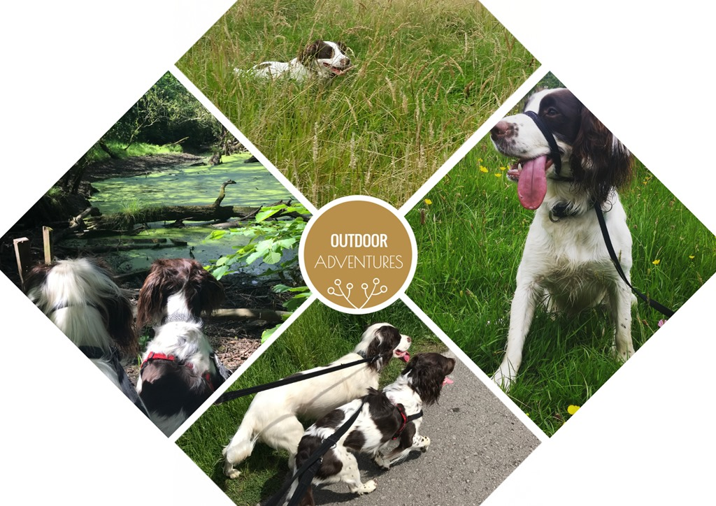 Outdoor Adventures With James Wellbeloved 2