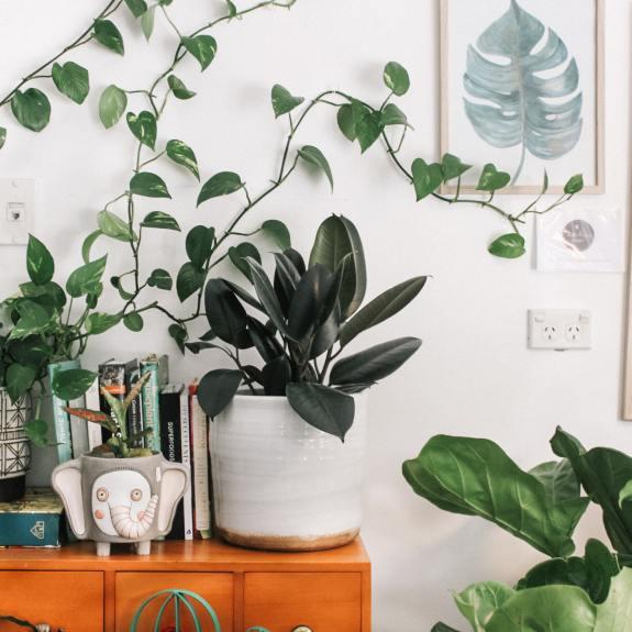house plant greenery