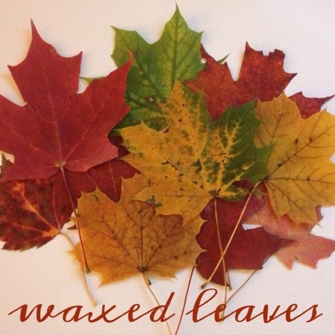 Waxed Leaves 3