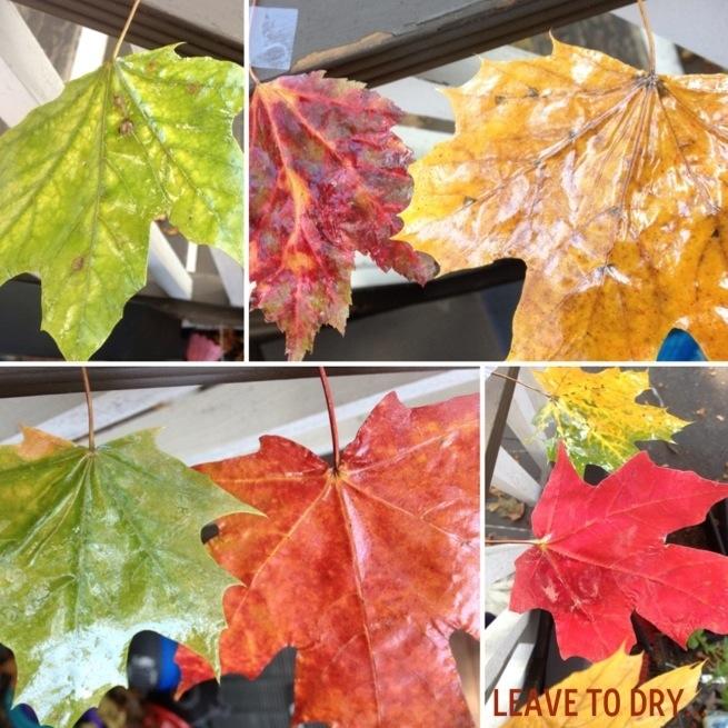 Waxed Leaves 5