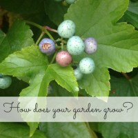 Our Garden: the Easter egg bush