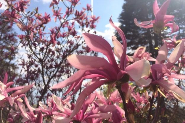 Spring Blossoms 17