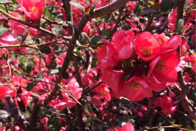 Spring Blossoms 6