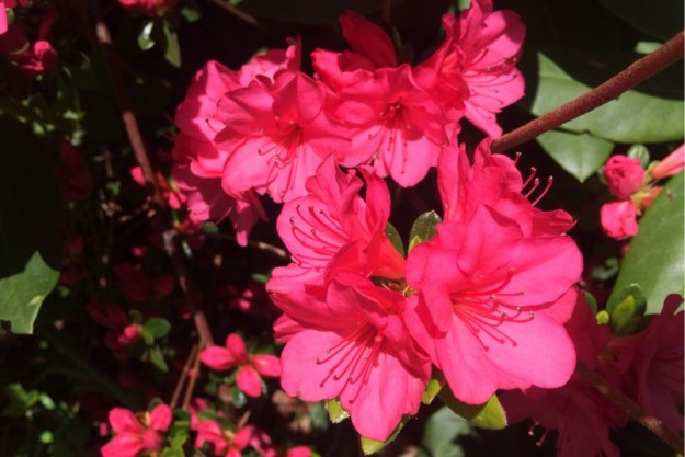 Spring Blossoms 8