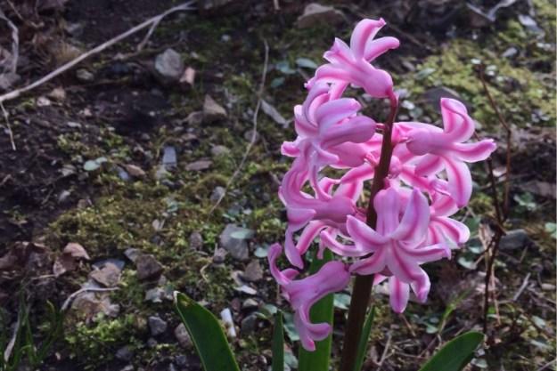 Spring at Last 5