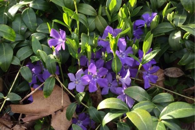 Spring at Last 6