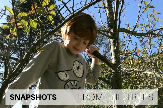 Snapshots from the trees
