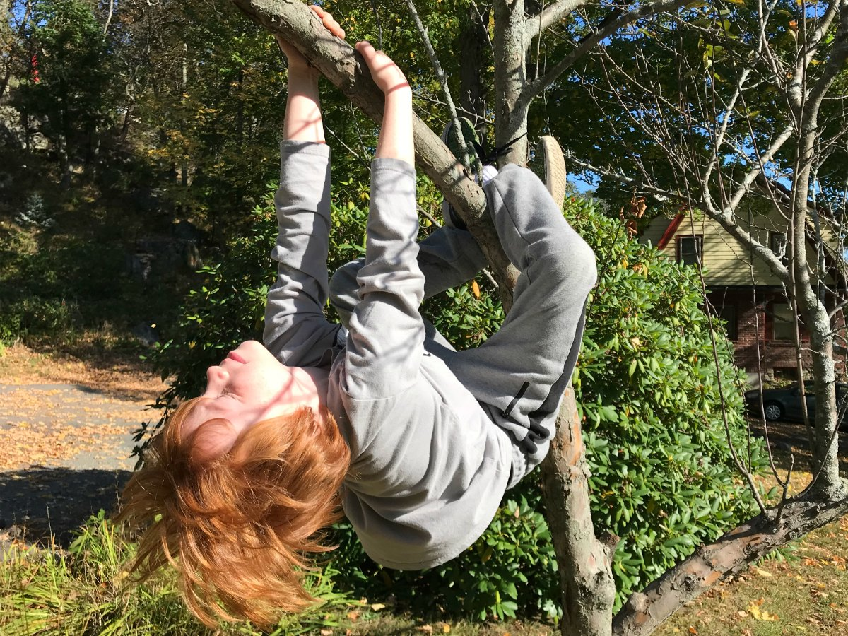 Snapshots from tree climbing adventures 8