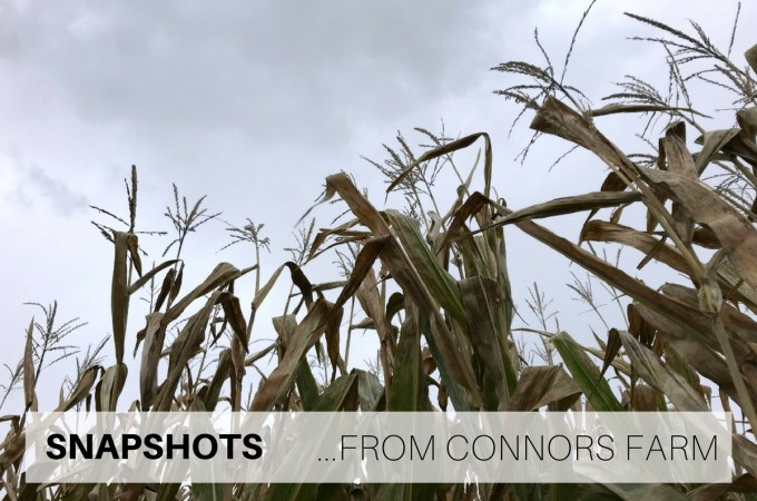 Snapshots from Connors Farm
