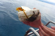saving floaty the traveler crab
