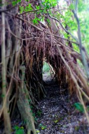 root tunnel