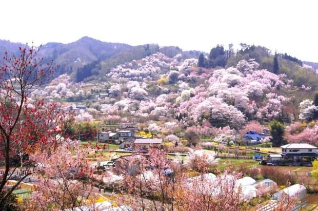 Parque Hanamiyama (Foto: Reprodução/Google Maps)
