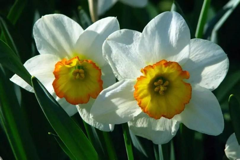 Narciso | ©Wikimedia Commons