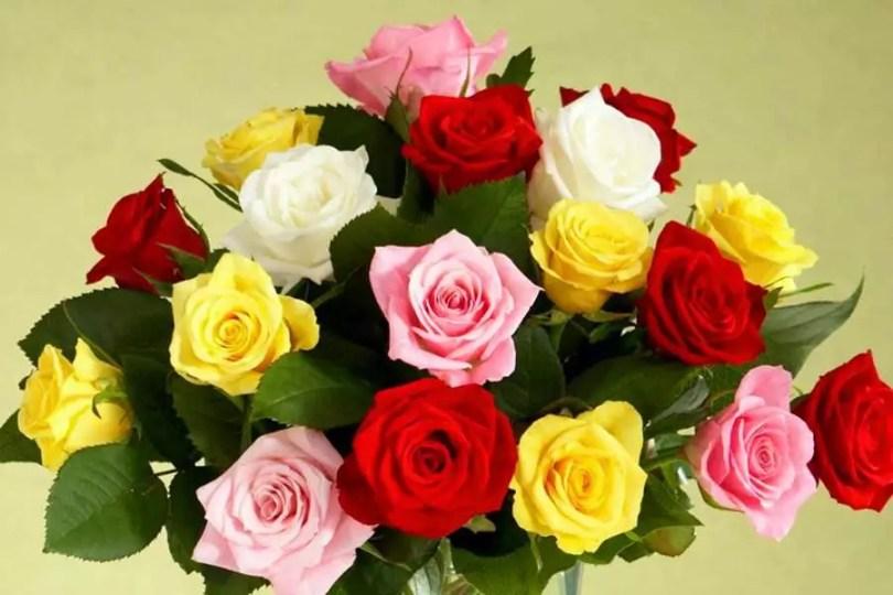 Rosas   ©Proflowers)