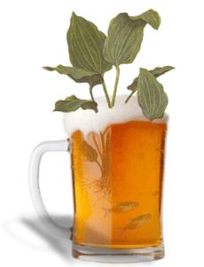caasyplantas