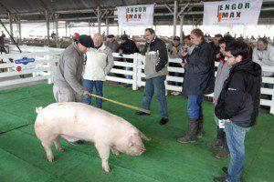 admision porcinos