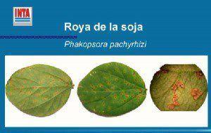 roya de la soja script-img-fotopara