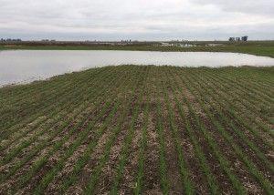 napas agua campos inundados