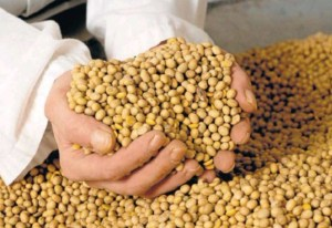 soja-semillas