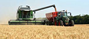 trigo-cosecha-96