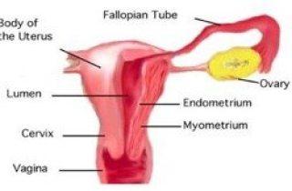 menstruación