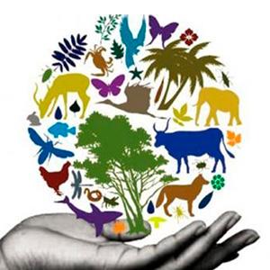 Convención sobre la Diversidad Biológica