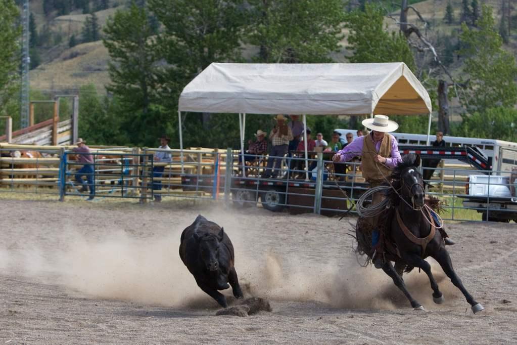 rodeo, canada, cowboy