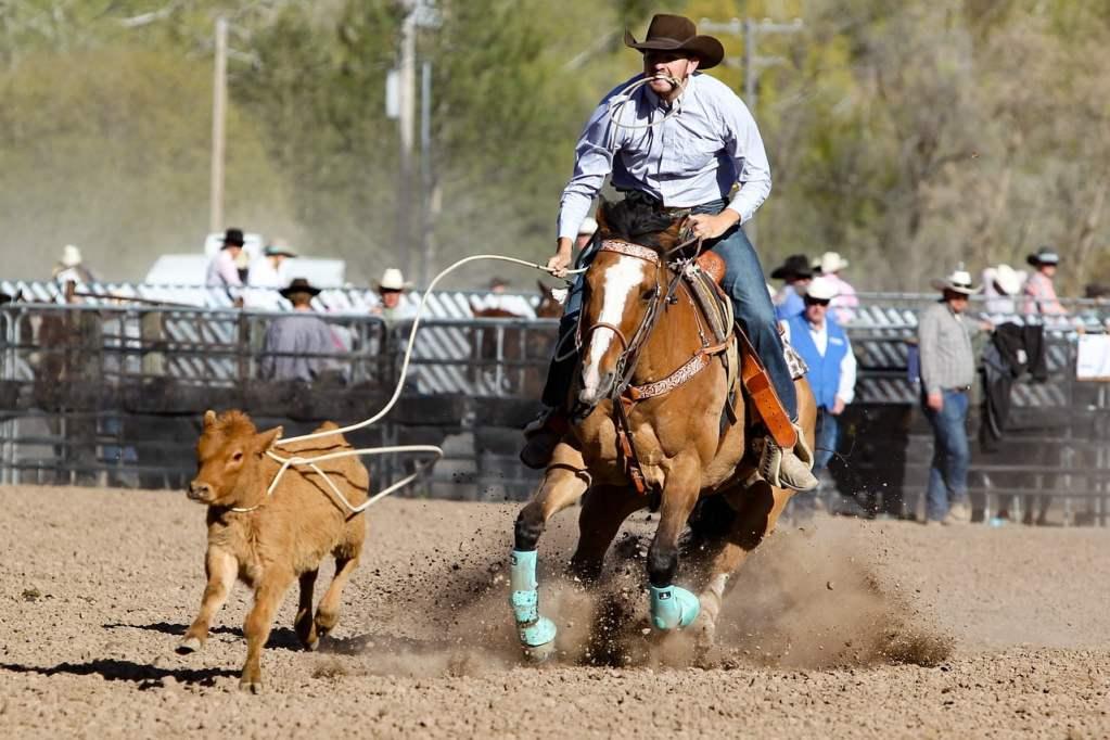 rodeo, horse, barrel