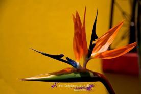 Ave del Paraiso Karla Castellanos - Galería - Fotos de Flores