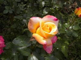 Fotografía de Ana Edith Pineda Sanchez. - Galería - Fotos de Flores