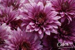 Fotografía de Oscar Sierra 4. - Galería - Fotos de Flores