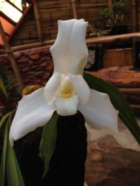 Monja Blanca Allan Mendoza Sagastume - Galería - Fotos de Flores