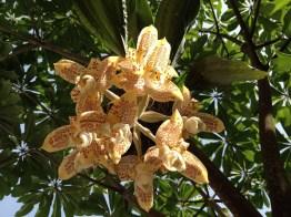 Orquideas foto por Eleonora De Guerra e1369860546734 - Galería - Fotos de Flores