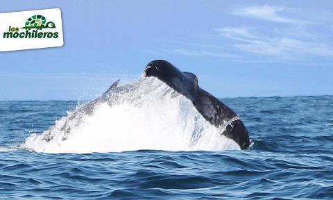 Los Mochileros Avistamiento de ballenas Feb 24 2012 2 - Avistamiento de Ballenas en Guatemala