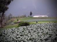 Plantaciones de Zanahoria Repollo Brocoli Remolacha frijol y maiz copia - Guía turística - Fuentes Georginas
