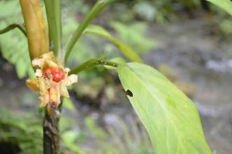 Sorprendentes y curiosas plantas - Guía Turística - Semúc Champey, Alta Verapaz