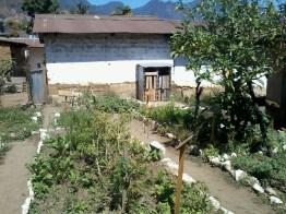 Huertos son creados en las casas donde las ancianas enseñan los secretos naturales - Guía Turística - San Juan La Laguna, Sololá
